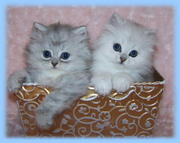 Sparkling kittens for a loving home